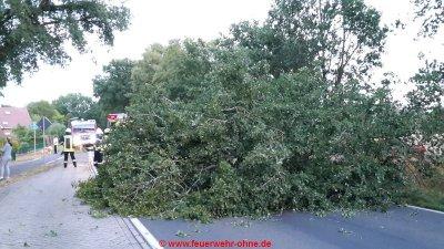 20180809 H1 Umgestürzter Baum